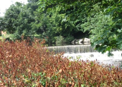 japanese-knotweed-after-treatment