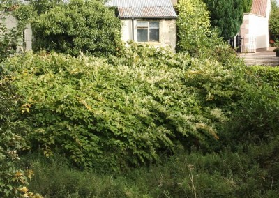 japanese-knotweed-private-property