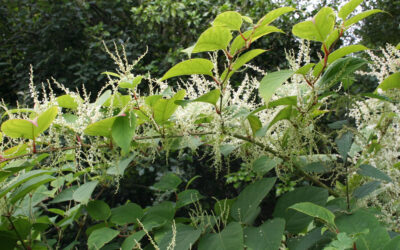 Out of Control – The vital role of farmers in halting invasive plants